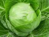 Качан капусти - це багатоцільовий овоч