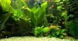Як пом'якшити воду в акваріумі: професійні засоби і домашні методи, спеціальні фільтри, перевірка води на м'якість