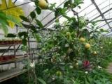 Лимонарий в Саратові - райський куточок